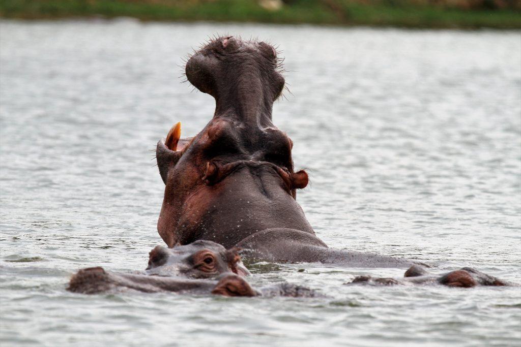 8 Day Uganda wildlife Budget safari
