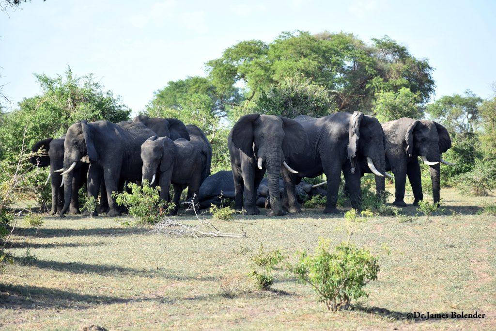 9 Day Uganda Family safari