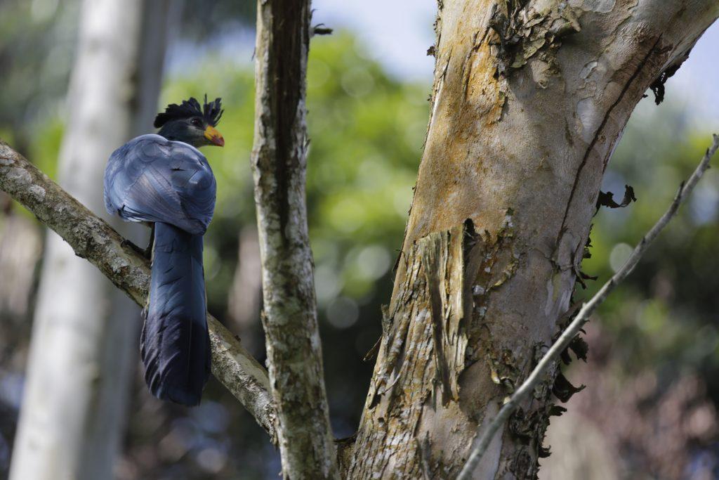 Bird watching safaris in Uganda