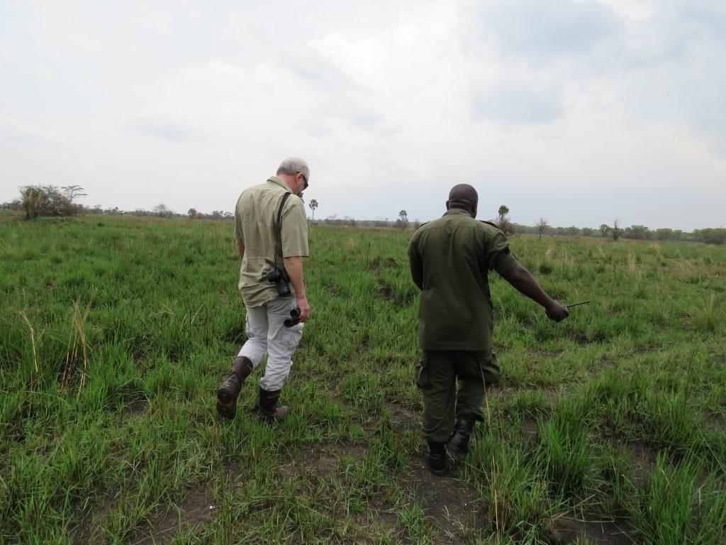 Walking safaris- Best things to do in Uganda