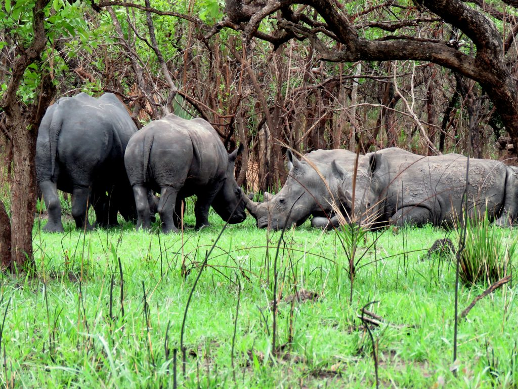 1 Day Rhino Tracking Tour