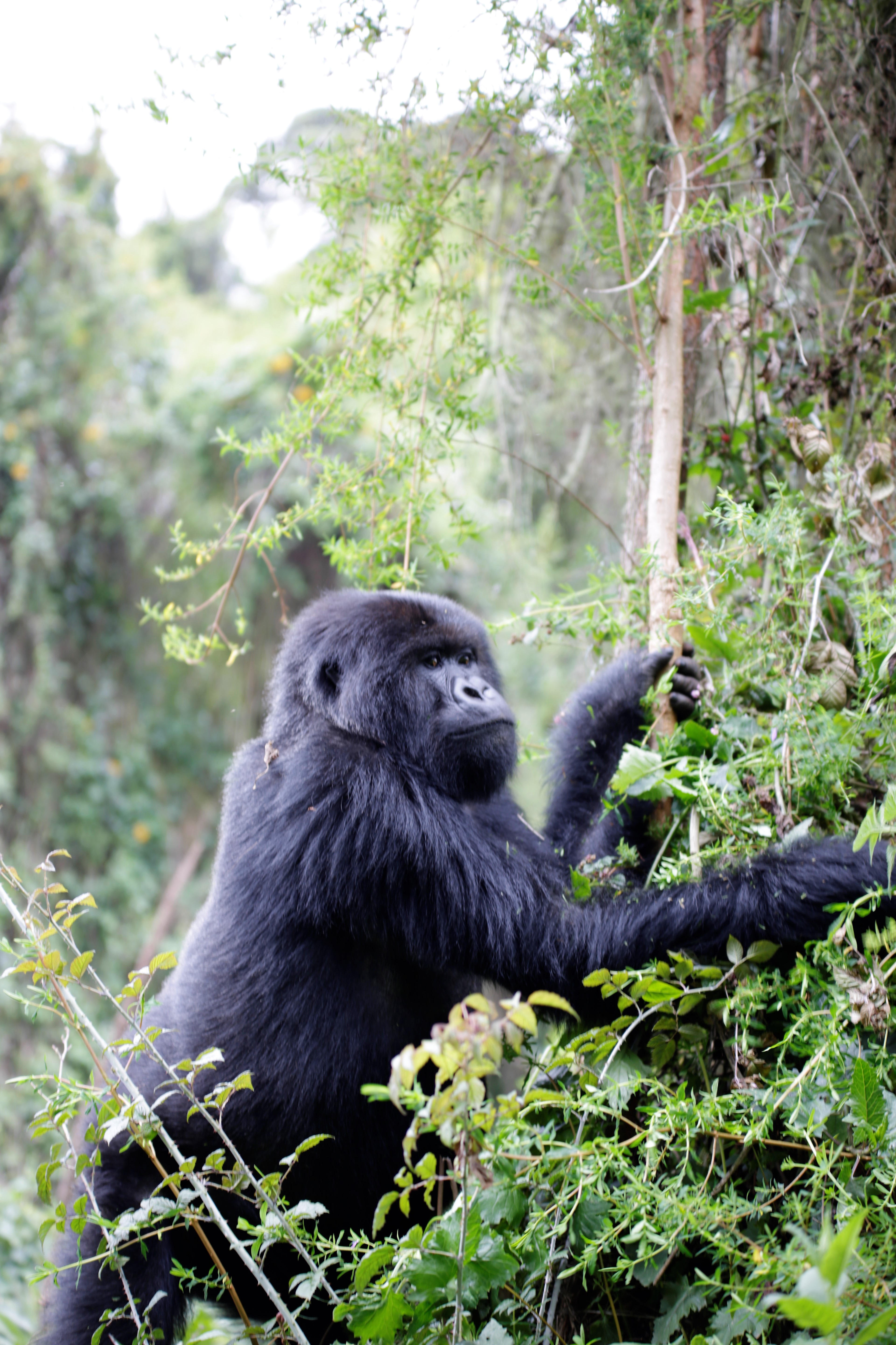 Gorilla Trekking for Travellers from Malta