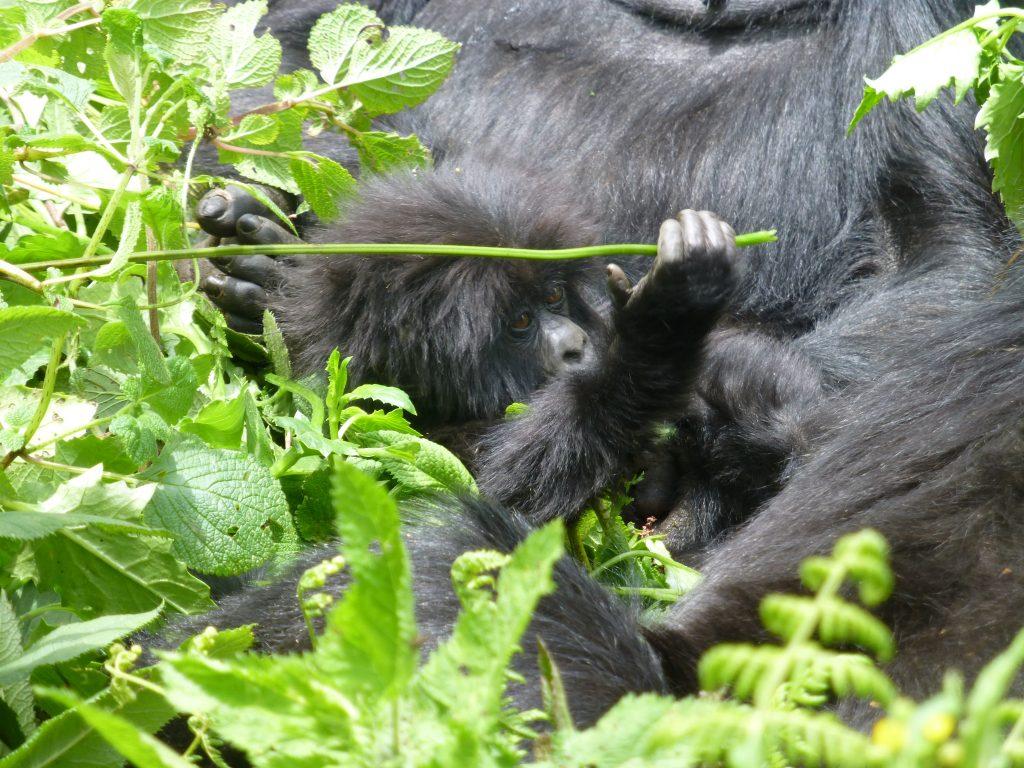 4 Days Lake Bunyonyi with gorilla tracking safari