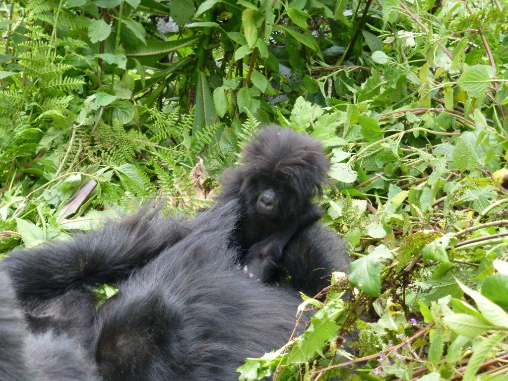 7 day Rwanda luxury Tour