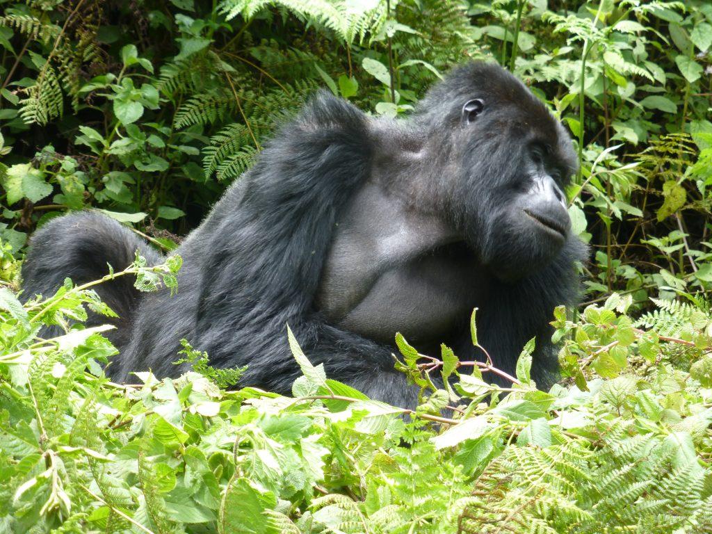 2020 Uganda Wildlife Safaris