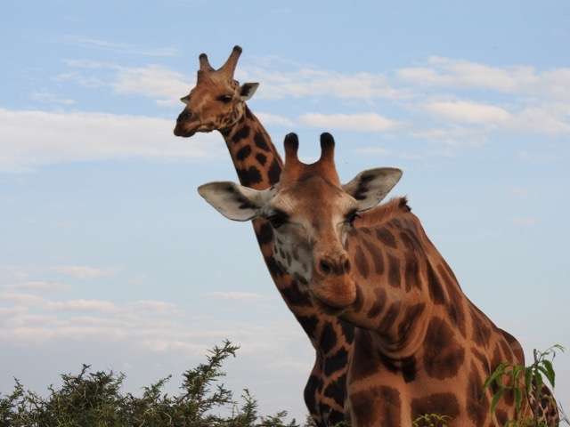 Akagera National Park - Best Things to do and see - Wildlife safaris - Accommodation