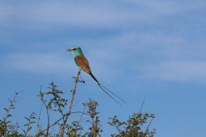 Bird watching- Top activities in Kidepo National park