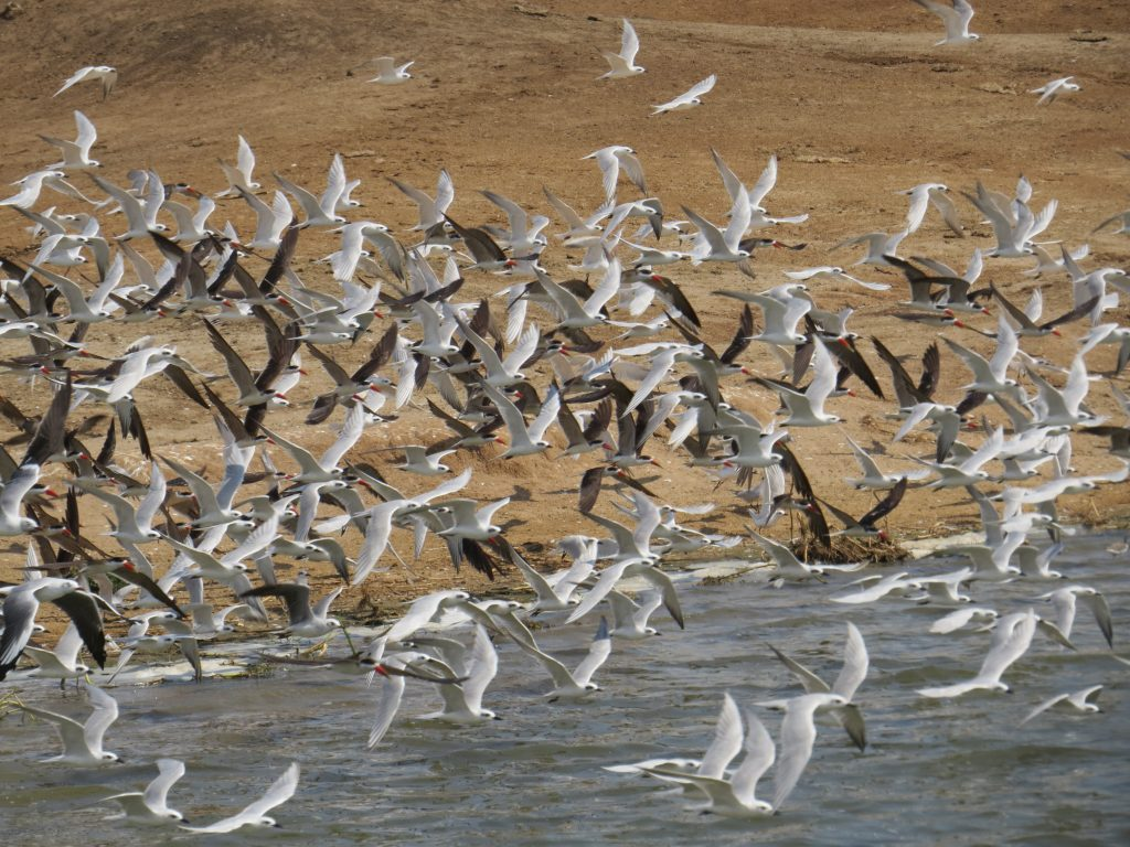 Bird watching at Kazinga channel
