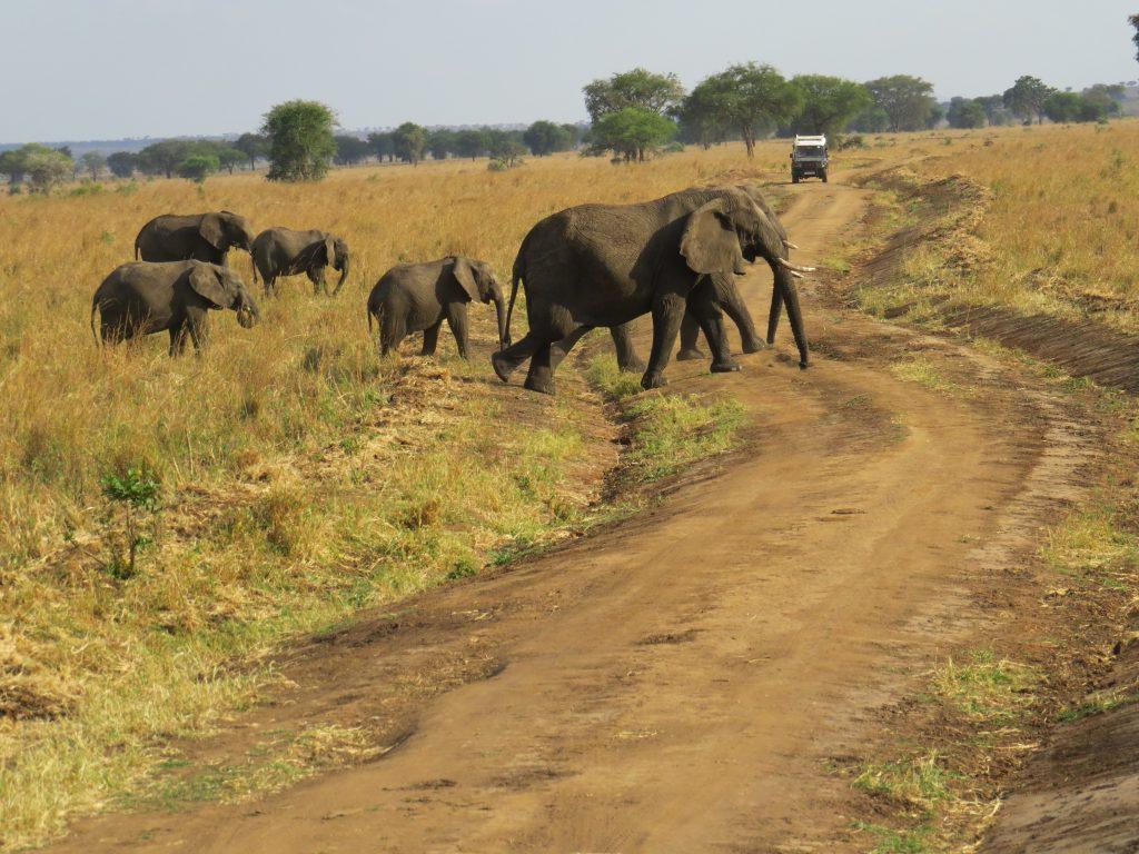 African elephants- Kidepo Wilderness safaris